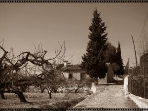 Camino de Albalat